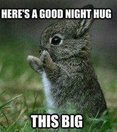 GoodNight Rabbit Hug