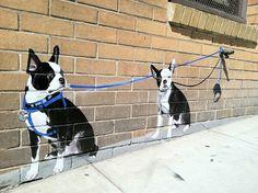 Boston terrier mural. Love it.