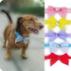 """SUAVE BOW"" Hand-crafted Shimmery Chiffon Bow with Pet Necklace Crystal Accents for Dogs and Cats"