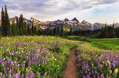 Rainier Mountain, Washington, US
