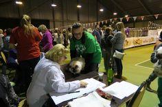 16 november Being a steward. November, Cats, Animals, November Born, Gatos, Animales, Animaux, Animal, Cat