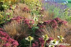 Moja walka z wiatrakami czyli kamieniołom trochę z przypadku - strona 339 - Forum ogrodnicze - Ogrodowisko Border Plants, Garden Inspiration, Beautiful, Gardens, Design, Outdoor Gardens, Garden, House Gardens