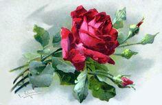rose art by Catherine Klein Art Floral, Floral Vintage, Vintage Flowers, Vintage Art, Vintage Images, Catherine Klein, Watercolor Flowers, Watercolor Art, Vintage Rosen