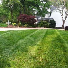 #fescue #lawnstripes #lawnbusiness #lawnbusinesscourse #lawncare #landscaping #shoutout @shoutout___power