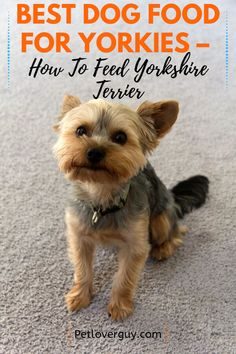 Best Dog Food For Yorkies – How To Feed Yorkshire Terrier Chien Yorkshire Terrier, Yorkshire Dog, Yorkshire Terrier Haircut, Yorky Terrier, Terrier Dogs, Bull Terriers, Royal Canin Dog Food, Best Puppy Food, Yorkie Puppy