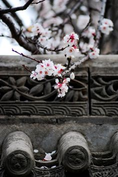 White Plum Blossoms in Xi'an Ancient City, China Chinese Style, Chinese Art, Traditional Chinese, Chinese Painting, Asia Expat, Photography Beach, Landscape Photography, Peking, Chinese Element