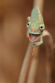 Super happy chameleon.