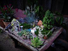 Fairy garden in the wheelbarrow