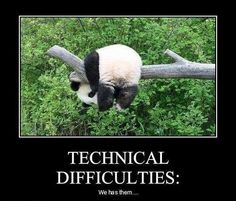 aww pandas!!!!