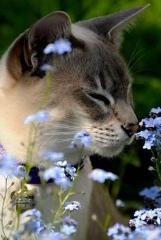 Have you ever seen a cat to love flowers so much? - Pet media videos and images - Petfinders