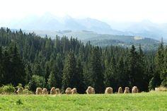 Łapszanka in Poland  #mountains #Poland #góry #Polska #travel #widok #landscape #mountainslandscape