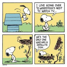 Snoopy and Woodstock Snoopy Cartoon, Snoopy Comics, Peanuts Cartoon, Peanuts Snoopy, Fun Comics, Cartoon Pics, Peanuts Comics, Snoopy Love, Snoopy And Woodstock
