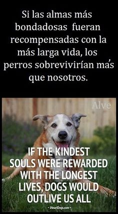 Cute Friends, Best Friends, I Love Dogs, Puppy Love, Amor Animal, Dog Information, I Miss U, Pet Puppy, Cute Quotes