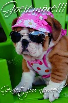 Pretty in pink. I Love Dogs, Puppy Love, Cute Dogs, Baby Animals, Cute Animals, Animal Babies, Silly Dogs, Bulldog Puppies, Cute Quotes