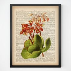 """Succulent print, Instant download vintage flower print, Antique flower print, Flower dictionary, Succulent wall art, Botanical digital print.  All dictionary prints: https://www.etsy.com/shop/LizasDictionaryArt  YOU WILL RECEIVE 300dpi RESOLUTION 2 JPG FILES!!!  1 JPG file at 8X10 inches; 1 JPG file at 11X14 inches.  IF YOU PREFER ANOTHER SIZE of this print you may request a custom order and I will resize it. Just press the button """"Request custom order"""", write dimensions a..."""
