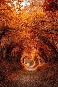 The Autumn orange tree tunnel. Autumn Scenery, Autumn Trees, Autumn Nature, Autumn Leaves, Beautiful World, Beautiful Places, Foto Top, Tree Tunnel, Autumn Aesthetic