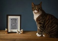 Alright all you cool cats and kittens, this one's for you! In fact, it's for anyone who wants to celebrate the art of subtle suggestion... Floss and Mischief's deceptive sampler is featured in Issue 12 - and it's perfect for the cat lovers out there! Get your claws stuck in - £8. Cross Stitch Designs, Cross Stitch Patterns, Crime Comics, Classic Corvette, Cross Stitch Magazines, Cool Cats, Claws, Are You The One, Cats And Kittens