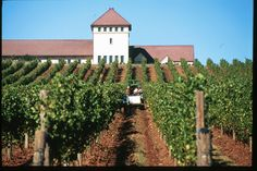 King Estate Winery in Southern Oregon, Photo Credit: Eugene, Cascades & Coast – Travel Lane County
