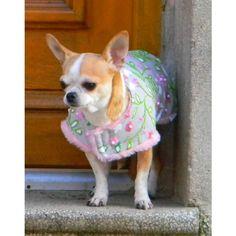 Chihuahua, French Bulldog, Corgi, Animals, Smallest Dog, Doggies, Corgis, Animales, Animaux