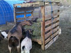 Pallet Goat Feeder - The Homestead.org Forum Needs to have an extra rail at the top to prevent any kids jumping into the hay. #goatvet