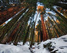 Sequoia National Park, Kalifornien