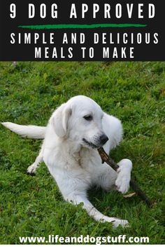 9 Dog Approved Simple and Delicious Meals to Make. #dogs #funnydogs #doghumor