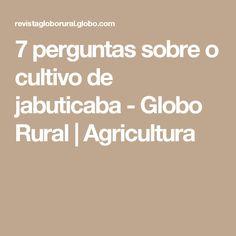 7 perguntas sobre o cultivo de jabuticaba - Globo Rural | Agricultura