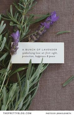 Free lavender printables perfect for any dinner or Thanksgiving table or simply to add to a gift - A bunch of lavender printable  | Photography by Jenni Elizabeth