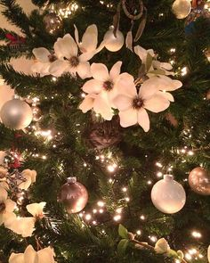 Look who we found in our Christmas tree?! #catstagram #catsofinstagram #cat #christmastree #christmas #catinachristmastree