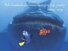 """Képtalálat a következőre: """"whales singing learning"""""""