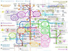 Metabolic Metro Map.svg