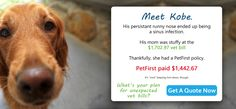 Meet Kobe #PetInsurance