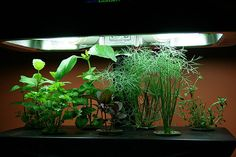 Don't forget to pair your plants with a good grow light! #hydroponics