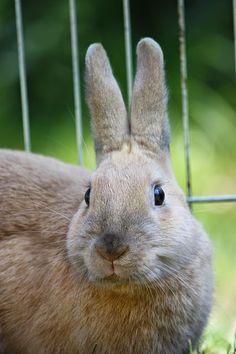 Kenya Info Hub: Rabbit rearing in Kenya 2015