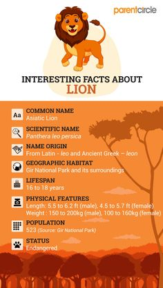 Fun Facts About Lions For Kids In 2020 Fun Facts About Lions Lion Facts Animal Facts For Kids