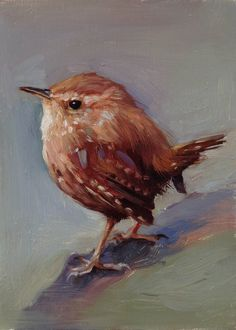 Winter Wren  Original oil painting  5 x 7 inches by FinchArts