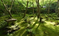 緑に覆われた祇王寺、苔庭には木漏れ日が陰影を作っていた=1日、京都市右京区 <撮影データ>ニコン D4s 17-35mm f16 1/80秒 ISO3200