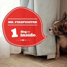 It's a good idea to have stickers at home that designate you have a pet. In case of a fire, people will know to look for your pet.