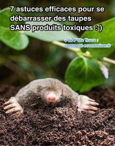 L'envie de les chasser définitivement vous démange, n'est-ce pas ? On vous comprend ! Heureusement, voici 7 astuces efficaces pour se débarrasser des taupes dans le jardin sans produits toxiques. Découvrez l'astuce ici : http://www.comment-economiser.fr/7-astuces-efficaces-pour-se-debarrasser-taupes-sans-toxiques.html?utm_content=buffer42ac4&utm_medium=social&utm_source=pinterest.com&utm_campaign=buffer