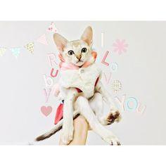 _ ㅤㅤㅤㅤㅤㅤㅤㅤㅤㅤㅤㅤㅤ my baby *⑅♥︎ ㅤㅤㅤㅤㅤㅤㅤㅤㅤㅤㅤㅤㅤ #singapura #ルビー #猫 #ねこ #ネコ #ねこ部 #愛猫 #家族 #にゃんすたぐらむ #instacat #고양이 #mybaby #cat #kitty #仔猫  #にゃんだふるらい