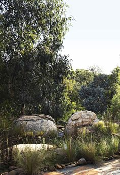 You would never guess that this seemingly untamed bush garden – complete with billabongs and boulders – was actually in inner Melbourne.