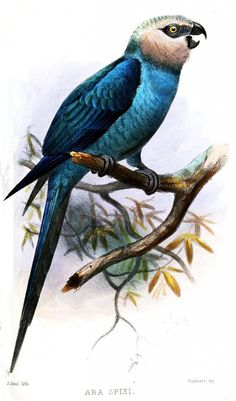 Protect Rare Bird Species from Imminent Extinction - ForceChange
