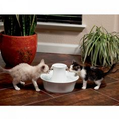 The Ceramic Avalon Fountain continuously recirculates and filters your pet's water, keeping it cleaner and fresher than a normal water bowl. The Avalon fountain offers 2 L of fresh, filtered water in a ceramic design that is easy to clean and looks great Dog Water Fountain, Cat Fountain, Cat Health Care, National Cat, Cats 101, Healthy Pets, Pet Care, Small Dogs, Keep It Cleaner