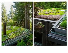 A detail of the drainage and gutter system for a living green roof by Feldman Architecture.