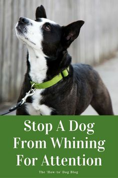 Dog Training Commands - CLICK THE PICTURE for Many Dog Obedience and Care Ideas. #dog #dogtraining