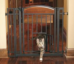 Make maneuvering easy for your pet dogs and cats with this Design Studio Walk Through Pet Gate with Small Pet Door. Engineered from premium-quality steel, this pet gate is strong and long lasting. Freestanding Dog Gate, Cat Gate, Dog Pumpkin, Pet Door, Baby Gates, Dog Fence, Cat Furniture, Rococo Furniture, Animal Design