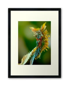 Framed Art Print from Microplants Series Centerpiece Decorations, Custom Boxes, Print Poster, Fractals, Framed Art Prints, Image