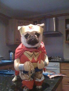 Wonder Pug! Winny is glad we don't dress him up. Love this though!