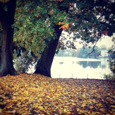 New photo online #autumn is a second spring when every leaf is a flower. Albert Camus Hope you like it