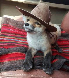 Fox with hat - your daily dose of funny cats - cute kittens - pet memes - pets in clothes - kitty breeds - sweet animal pictures - perfect photos for cat moms Cute Funny Animals, Funny Animal Pictures, Cute Baby Animals, Animals And Pets, Cute Pictures, Funny Pics, Funny Memes, Pet Memes, Random Pictures